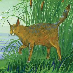 Beautiful wildcat walking outdoors.