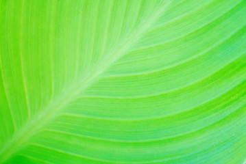 abstract green leaf texture background closeup