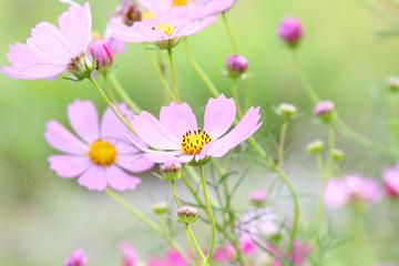 flowers pink gentle beautiful bright