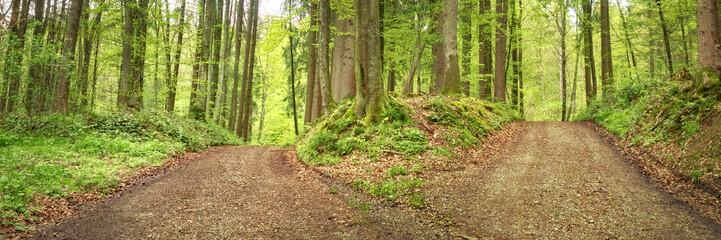 Weg der Entscheidung - Waldweg