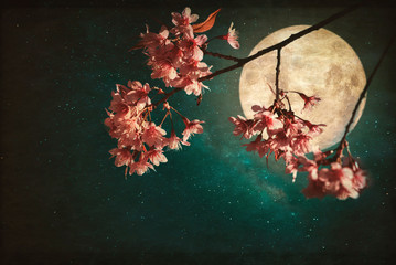 Wall Mural - Antique and vintage style photo - Beautiful pink cherry blossom (sakura flowers) in night of skies with full moon and milky way stars.