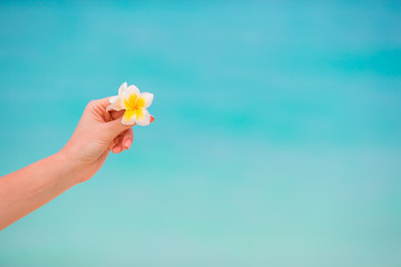 Beautiful frangipani flowers background turquoise sea on white beach