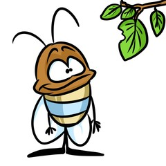Small beetle insect cartoon illustration isolated image animal character