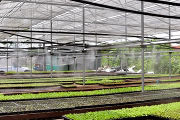 plant seedling lettuce in house.
