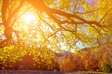 Fantastic landscape with sunshine in the autumn forest