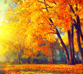 Autumn. Fall nature scene. Beautiful autumnal park