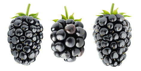 Three isolated blackberries