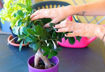 Donna mentre cura le piante