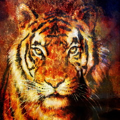 Tiger head, abstract color Background, computer collage, Eye contact.