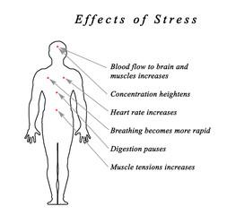 Stress &  Body