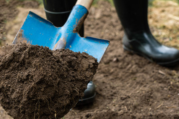 Worker digs the black soil with shovel  in the vegetable garden, man loosens dirt in the farmland, agriculture and tough work concept