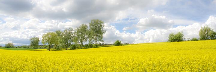 Frühlingshaftes Rapsfeld