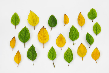 Top view of beautiful autumn leaves on white background
