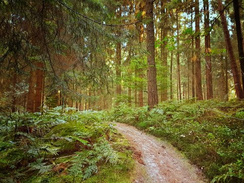 Waldweg in einem natürlichen Wald