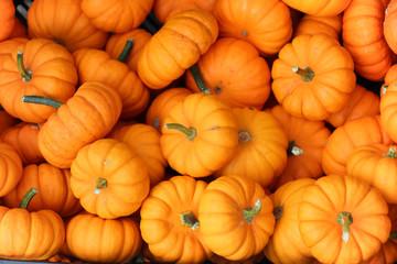 many miniature vibrant orange pumpkins in a pile