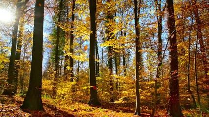 Wall Mural - Wald mit Sonne, blauem Himmel und fallenden Blättern im Herbst