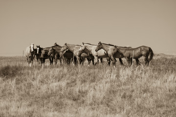 Horses behind the fence sepia tone
