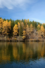 bright autumn landsape. blue sky and colorful green, yelow and orage foliage reflect in calm water of river/