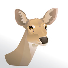 Vector illustration of deer  head portrait isolated on white background.