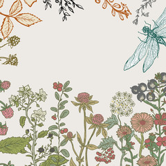 Herbs and wild flowers. Vector seamless floral border.