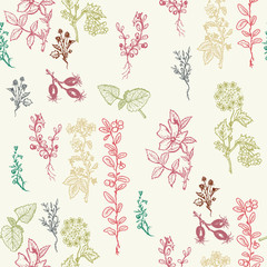 Herbs seamless patterns hand drawn ink vector Botanical design