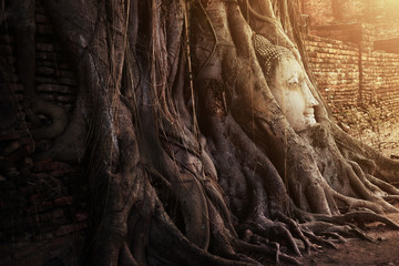 Dramatic Light of Ancient and historical Buddha head in the tree state at Ayutthaya Thailand