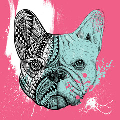 Zentangle stylized French Bulldog with paint splatters, Hand drawn illustration