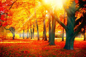 Foto op Aluminium Herfst Autumn. Fall nature scene. Beautiful autumnal park