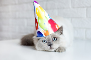 funny cat in a birthday hat