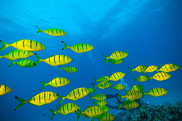 Flock of fish in ocean