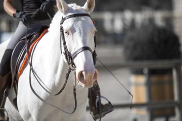 La complicité du cheval et de l'écuyer