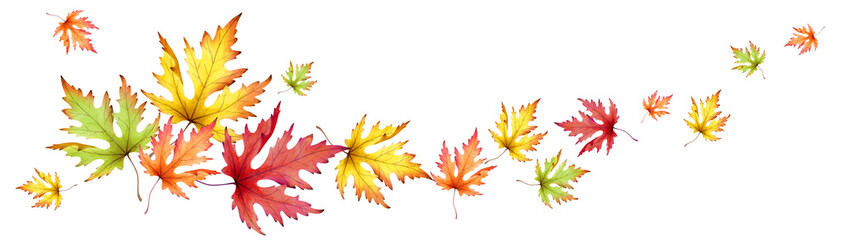 Autumn maple leaves. Horizontal panoramic image. Watercolor