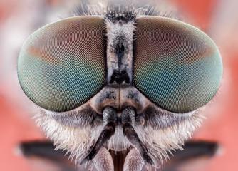 Fotobehang Macrofotografie fly macro insect nature animal eye bug close small wildlife head portrait color sharp