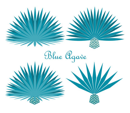 Blue agave or tequila agave plant. Vector set