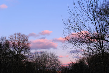 Blue Sunset Sky with Lilac and Pink Clouds and Dark Silhouettes of Barren Winter Trees