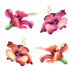 Hibiscus flower. Watercolor set