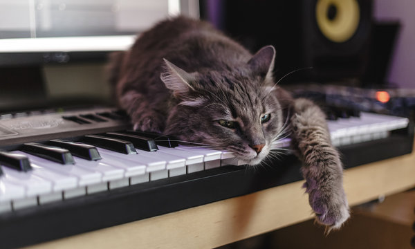 Chewie the cat has tired of making music