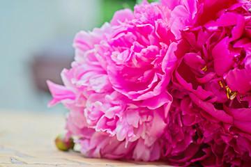 Macro shot of pink peony flowers