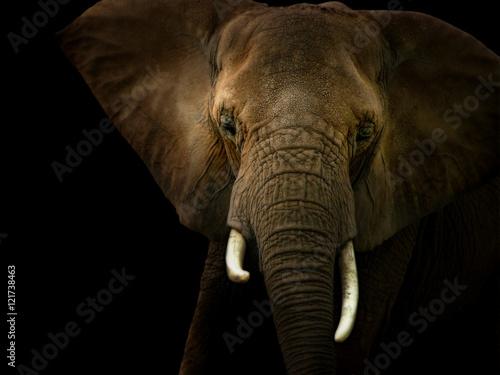 Elephant Against Black Background