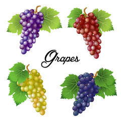 Four branches of grapes