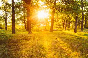 Sunset Sunrise In Atumn Forest. Natural sunlight.