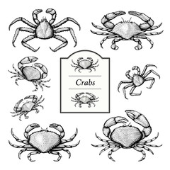 Crab Illustrations in a vintage style
