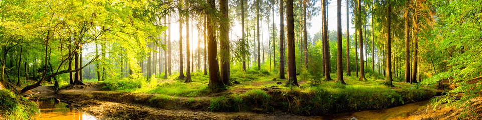 Fond de hotte en verre imprimé Pistache Idyllischer Wald mit Bach bei Sonnenaufgang