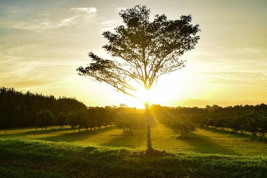 Dawn over the citrus farm