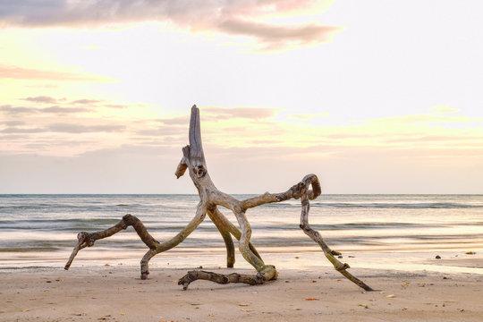 Driftwood on Finch Bay Beach