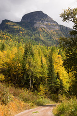 Fall Color Many Glacier National Park Montana Trial Forest Road
