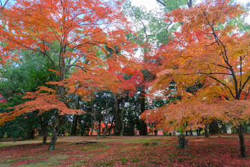 Japanese garden in Autumn color, Kyoto, Japan