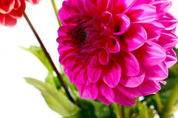 dahlia garden image as an element festive floral arrangements
