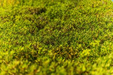 Carpet of plants,
