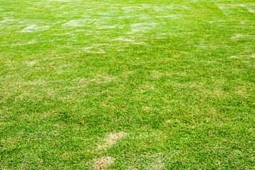 Green lawn blank space pattern background